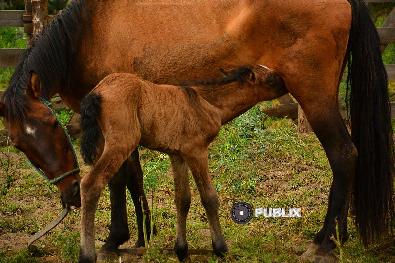 Newborn – Recién Nacido